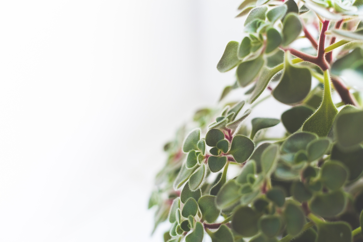 Improve your Enviornment with these 4 Durable Houseplants